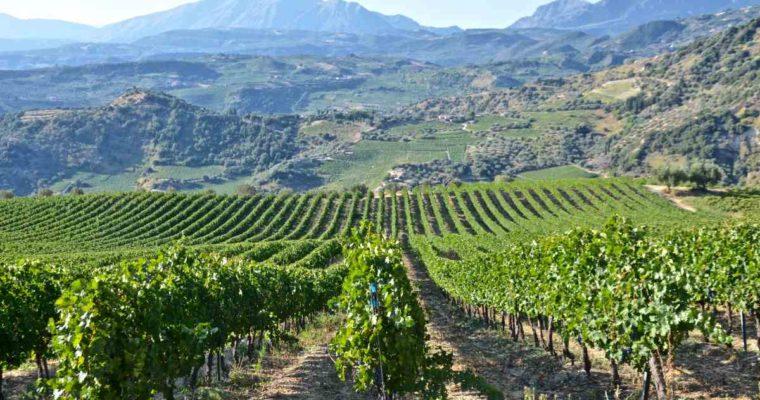 Τα βραβευμένα κρασιά της Αχαΐας – Μέρος 1ο