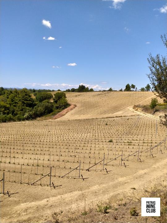 Patras Wine Club κτήμα δύο ύψη 5